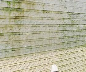 外壁のカビ・苔